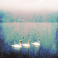 Three Swans by Joana Kruse
