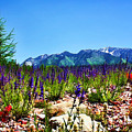 Wasatch Mountains In Spring by Tracie Kaska