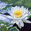 Water Lily by Sam Sidders