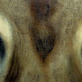 Who's Watching Who...florida Panther by Darlene Green