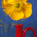 Yellow Iceland Poppy Red Pitcher by Garry Gay
