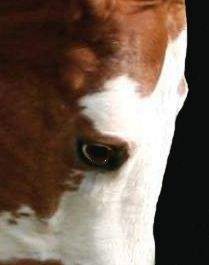 Best Eye Expression of a Horse