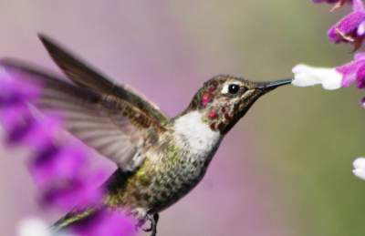 Best hummingbird photo or another media from you