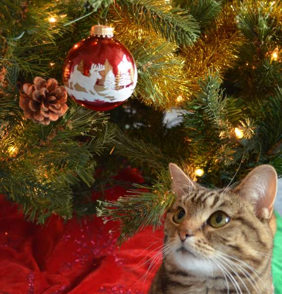 Cats and Kittens Christmas Card Opportunities