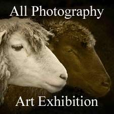 The All Photography Art Exhibition is Now Online and Ready to View