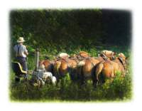 Amish Or Mennonite Ways And Means