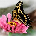 Butterflies on Flowers-25