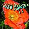 I Like Poppies