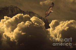 Before Memory . I Have Soared With The Hawk . By Wingsdomain.com Art And Photography
