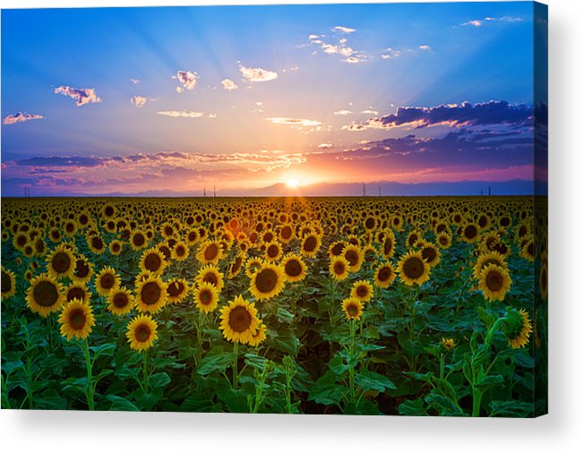 Horizontal Acrylic Print featuring the photograph Sunflower by Hansrico Photography