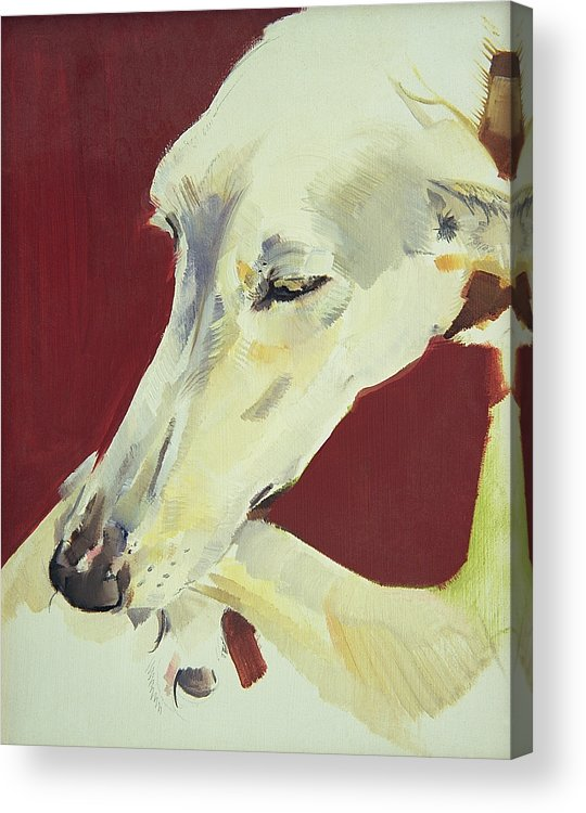 Dog; Pet; Greyhound; Greyhound; Whippet; Animal; Docile; Washing Acrylic Print featuring the painting Jack Swan I by Sally Muir