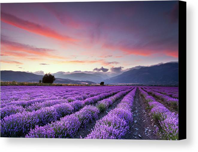 Horizontal Canvas Print featuring the photograph Lavender Field by Evgeni Dinev Photography