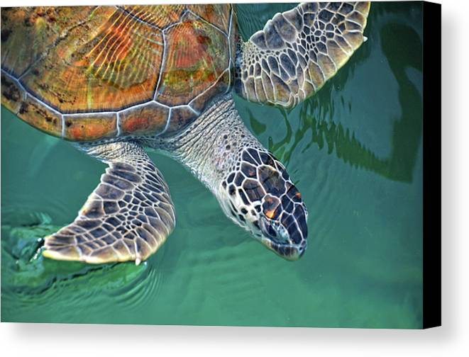 Horizontal Canvas Print featuring the photograph Sea Turtle by Thank you.