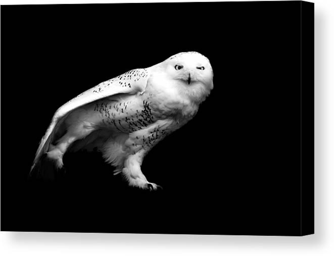 Horizontal Canvas Print featuring the photograph Snowy Owl by Malcolm MacGregor