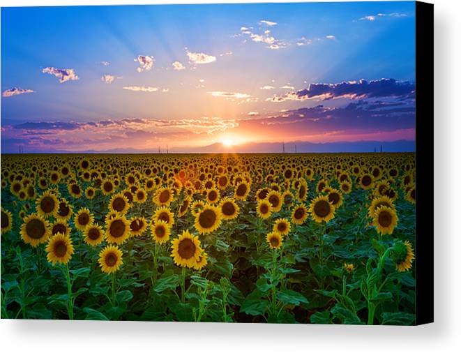 Horizontal Canvas Print featuring the photograph Sunflower by Hansrico Photography