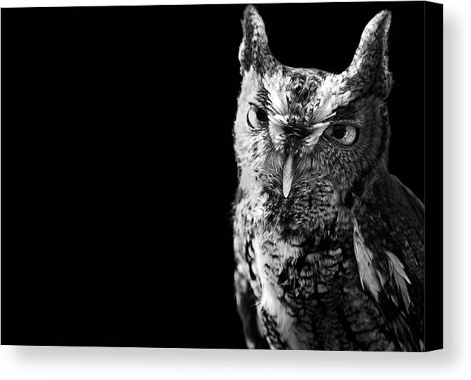 Horizontal Canvas Print featuring the photograph Screech Owl by Malcolm MacGregor