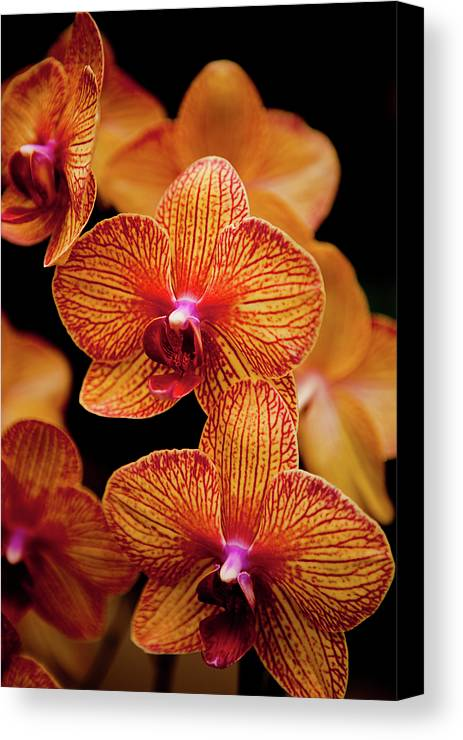 Vertical Canvas Print featuring the photograph Deep Cut Orchid Society 15th Annual Orchid Show by Dan Pfeffer