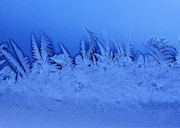 Frost Greeting Card featuring the photograph Frost Forest by Thomas R Fletcher