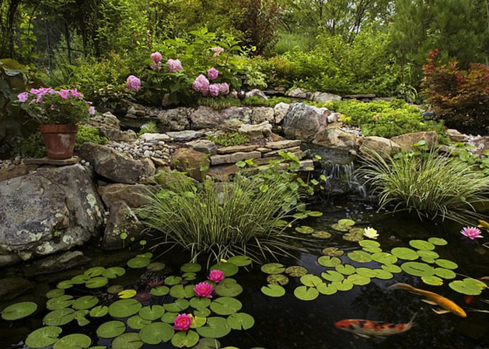 Water Lilly Greeting Card featuring the photograph Garden Pond - D001133 by Daniel Dempster