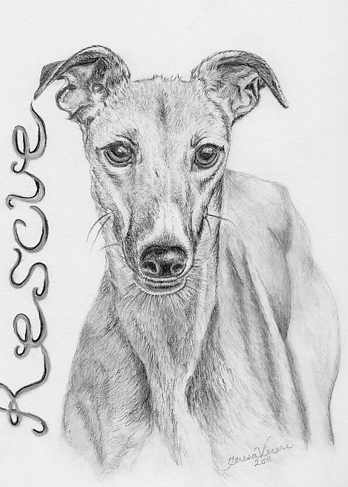 Dog Canine Greyhound Animal Pet Rescue Nature Greeting Card featuring the drawing Petunia by Teresa Vecere