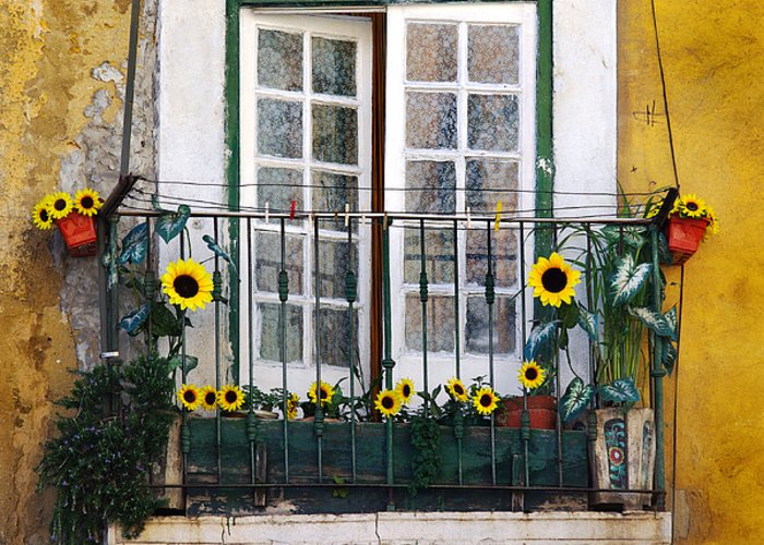 Address Greeting Card featuring the photograph Sunflower Balcony by Carlos Caetano