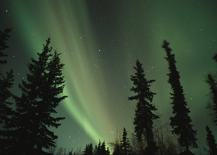 The Northern Lights Illuminate The Evening Sky Over The North Pole. Greeting Card featuring the photograph The Northern Lights by Maria Stenzel