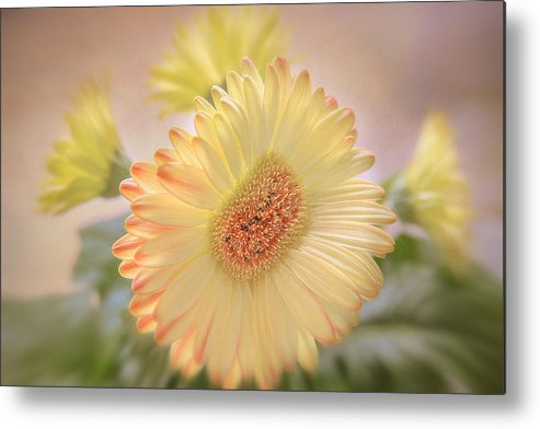 Flowers Canvas Metal Print featuring the photograph A Touch Of Sunshine by Fiona Messenger
