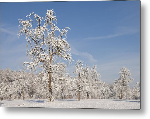 Winter Metal Print featuring the photograph Beautiful Winter Day With Snow Covered Trees And Blue Sky by Matthias Hauser