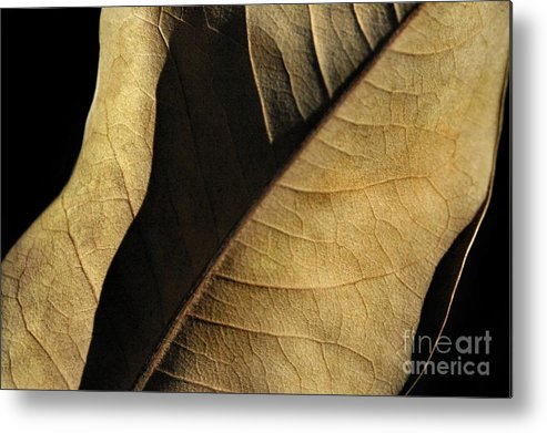Nature Metal Print featuring the photograph Natural Seduction by Dan Holm