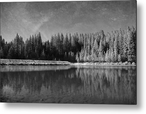 White Pines Lake Community Park Metal Print featuring the photograph Those Days Are Gone by Laurie Search