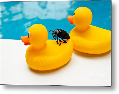 Absurd Metal Print featuring the photograph Waterbug Takes Yellow Taxi by Amy Cicconi