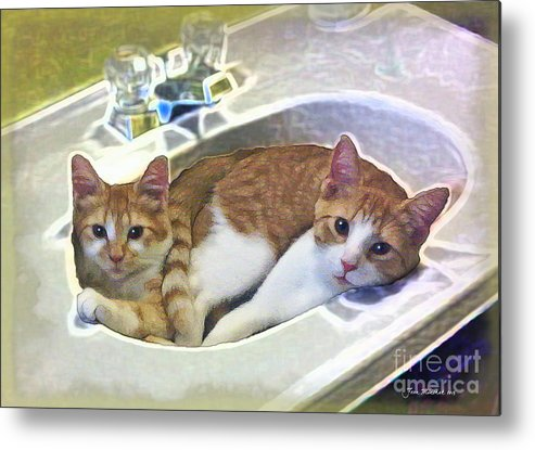 Cats Metal Print featuring the photograph Mary's Cats by Joan Minchak