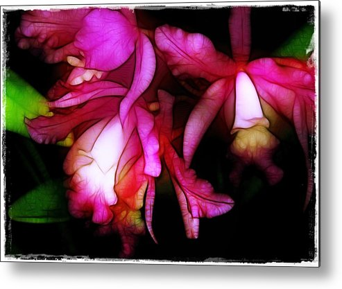 Orchids Metal Print featuring the photograph Cattleyas by Judi Bagwell