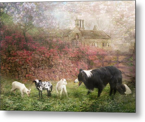 Border Collie Metal Print featuring the photograph The Babysitter by Trudi Simmonds