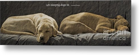 Sleeping Dogs Metal Print featuring the photograph Let Sleeping Dogs Lie by Gwyn Newcombe
