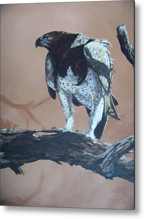 Martial Eagle Metal Print featuring the painting Martial Eagle by Robert Teeling