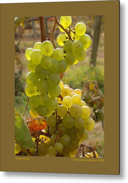 Grapes Metal Print featuring the photograph Grape Spiral by Patricia Overmoyer