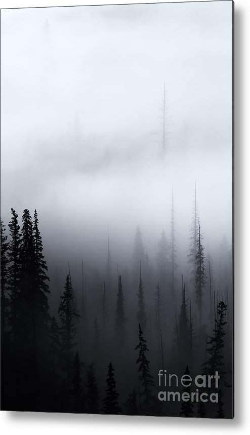 Forest Metal Print featuring the photograph Piercing The Clouds by Mike Dawson