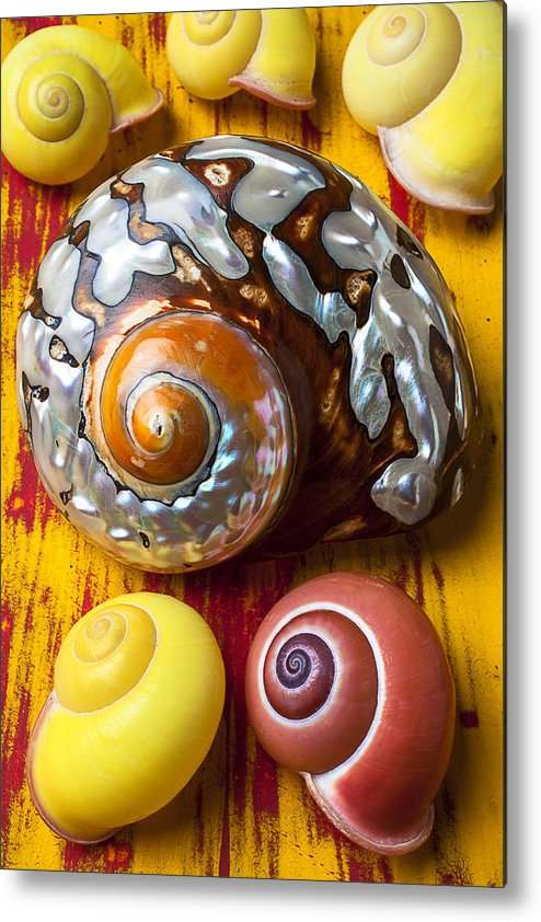 Six Metal Print featuring the photograph Six Snails Shells by Garry Gay