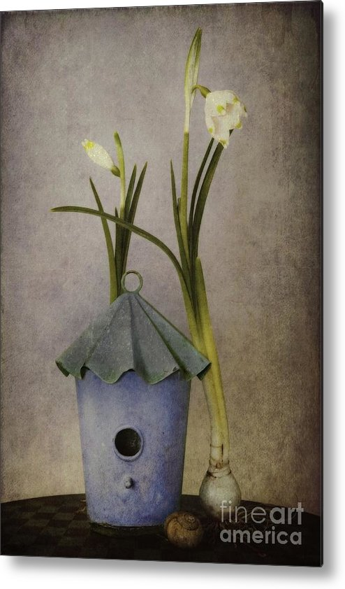 Still Life Metal Print featuring the photograph March by Priska Wettstein