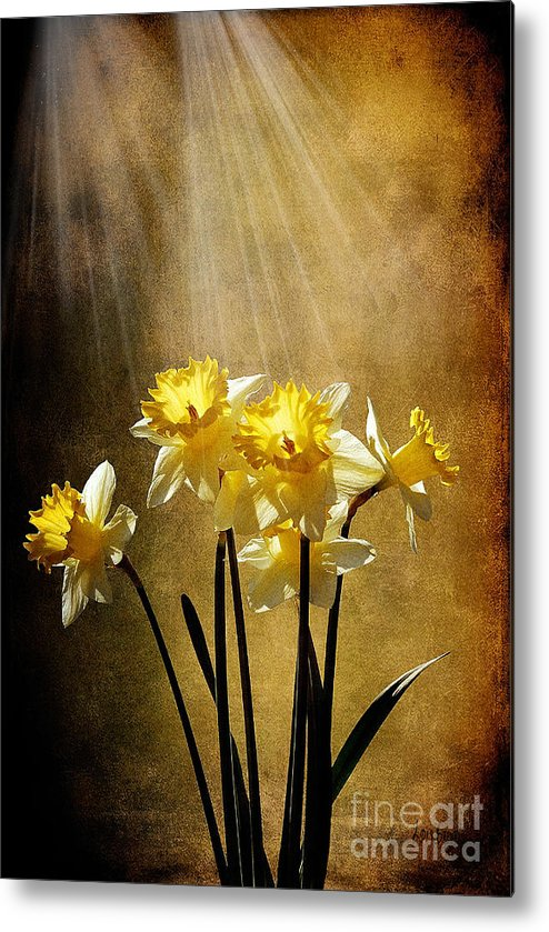 Daffodils Metal Print featuring the photograph Spring Sun by Lois Bryan
