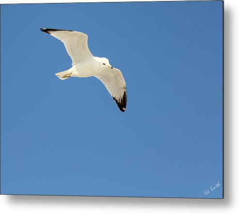 Smooth As Silk Metal Print by Ed Smith