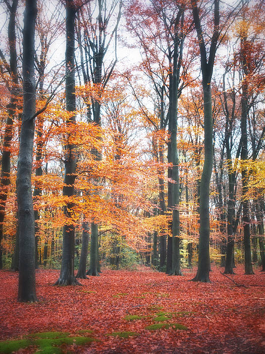All Poster featuring the photograph Autumn Whispers I by Artecco Fine Art Photography