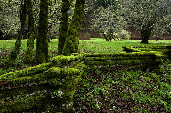 Moss Poster featuring the photograph Mossy Fence 2 by Bob Christopher