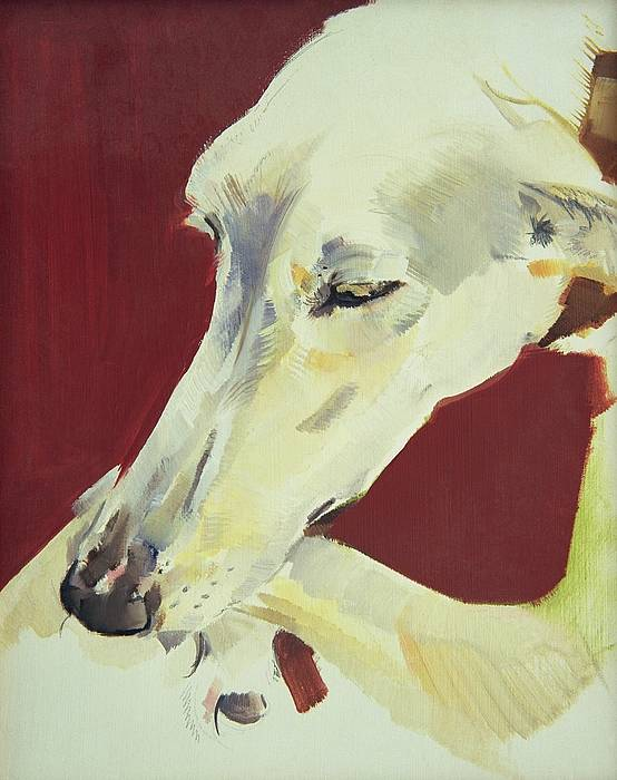 Dog; Pet; Greyhound; Greyhound; Whippet; Animal; Docile; Washing Poster featuring the painting Jack Swan I by Sally Muir