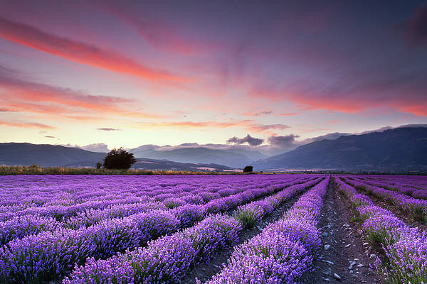 Horizontal Poster featuring the photograph Lavender Field by Evgeni Dinev Photography