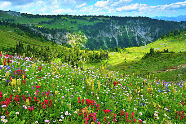 Horizontal Print featuring the photograph Wild Flowers Blooming On Mount Rainier by Feng Wei Photography