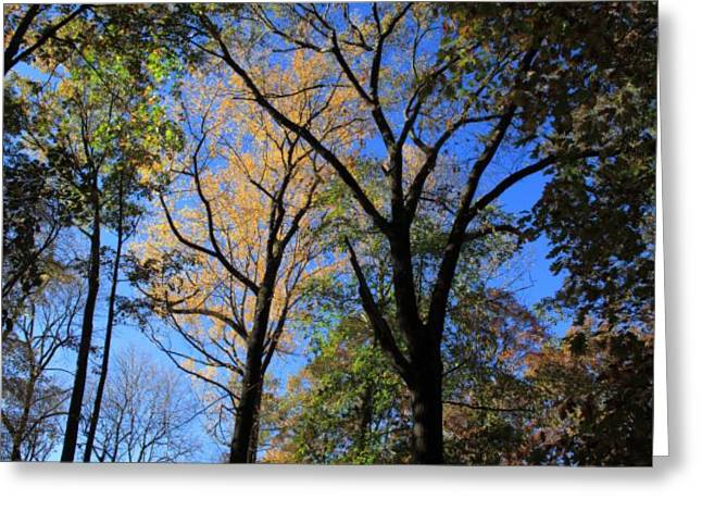 November Framed Prints Greeting Cards - Autumn Trees Greeting Card by Frank Romeo