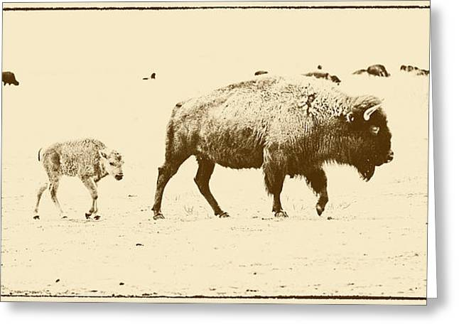 Bison Mother And Calf Greeting Card by Melany Sarafis