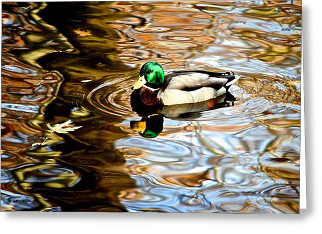 Yellow Beak Greeting Cards - In the Spotlight Greeting Card by Frozen in Time Fine Art Photography